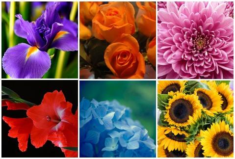 62a04ed06f27a 10 simbólicas flores alternativas a las rosas rojas