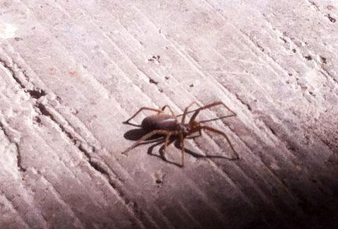 Científicos enseñan a saltar a una araña