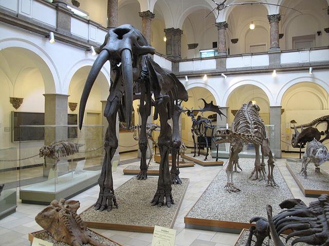 München Naturkundemuseum