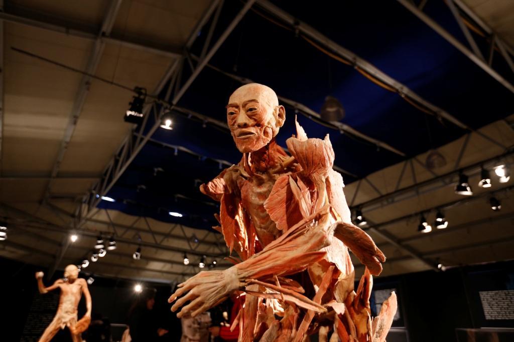 Adéntrate al mundo del cuerpo humano con esta exposición