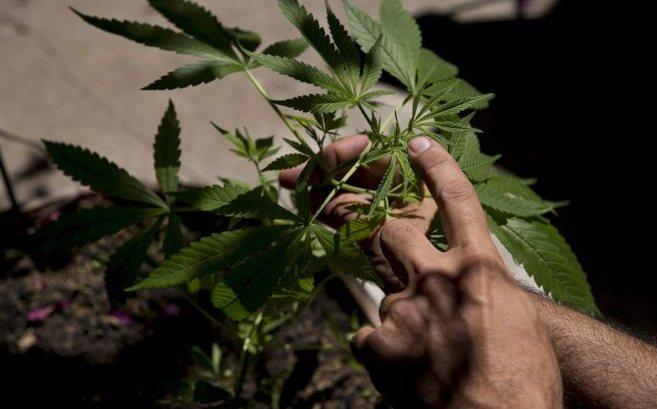 Canadá legaliza la marihuana para uso recreativo