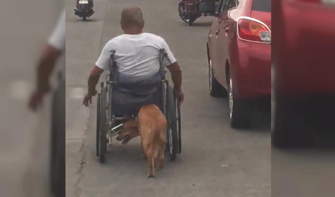 Increíble: un perro ayuda a su dueño a trasladarse empujándole la silla de ruedas
