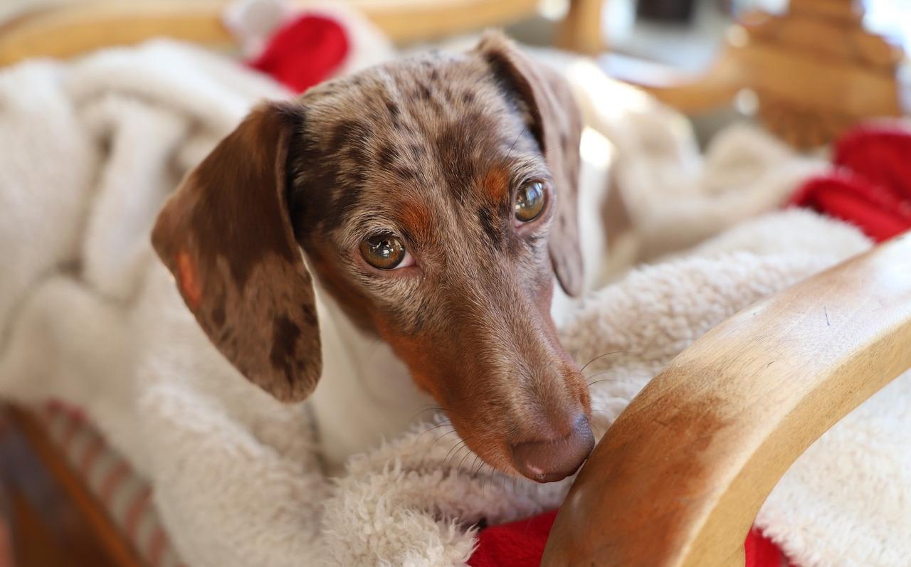 Tu perro sabe cuando estás triste, y trata de consolarte