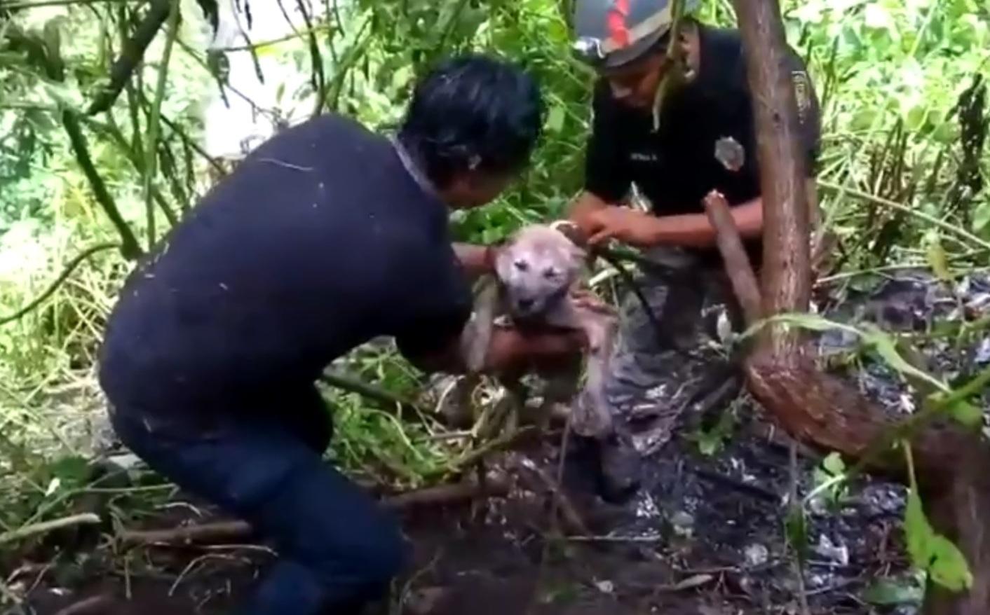 VIDEO: Rescatan a perro de barranca en Álvaro Obregón