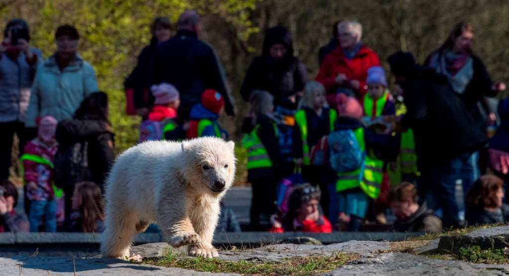 'Hertha' la nueva osita polar que roba suspiros en Berlín