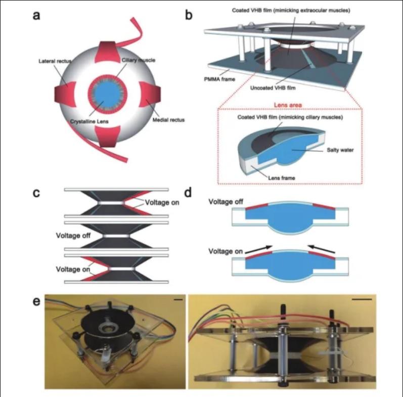 Científicos crean unos lentes de contacto que hacen zoom solamente con parpadear