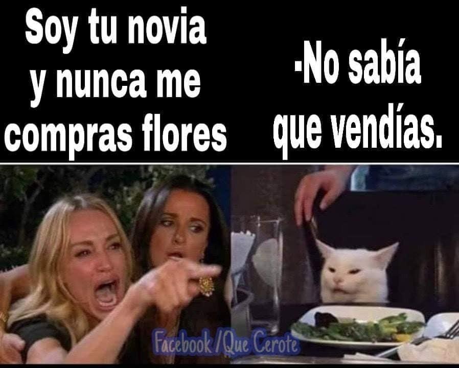 Meme Del Gato En La Mesa Los Mejores Y Más Divertidos