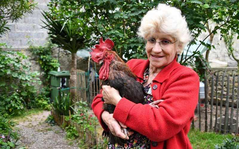El gallo Maurice gana batalla judicial en Francia