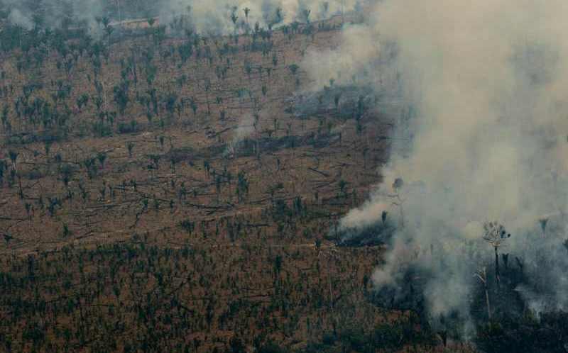 Mafias de la Amazonia mataron a 300 activistas del medio ambiente