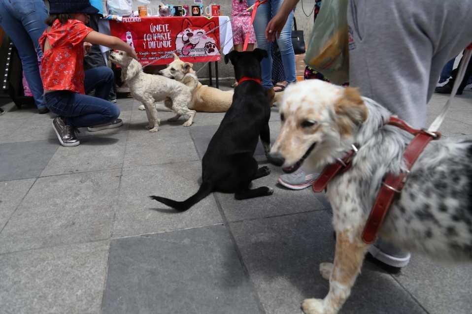 Cuestionan selección de consejero de Bienestar Animal en Pachuca - Milenio.com