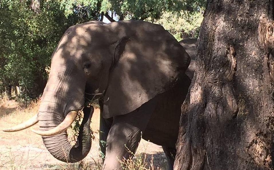 Mueren 293 elefantes y 96 personas en Sri Lanka