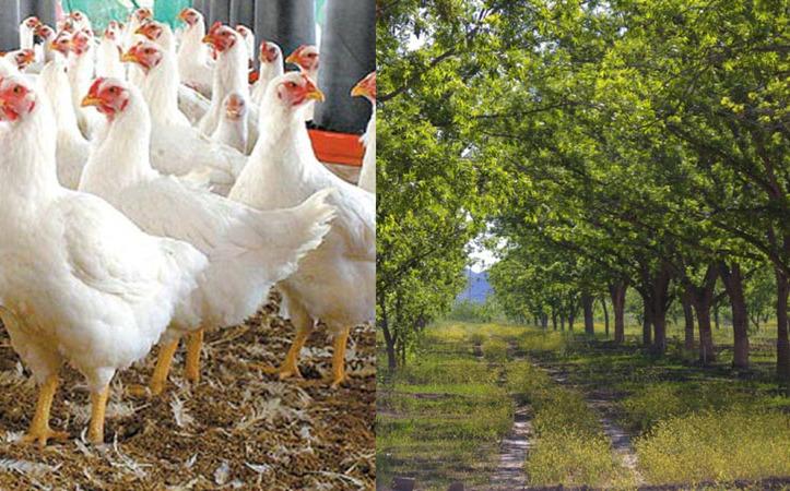Durango: Presentan proyecto de autosuficiencia alimentaria