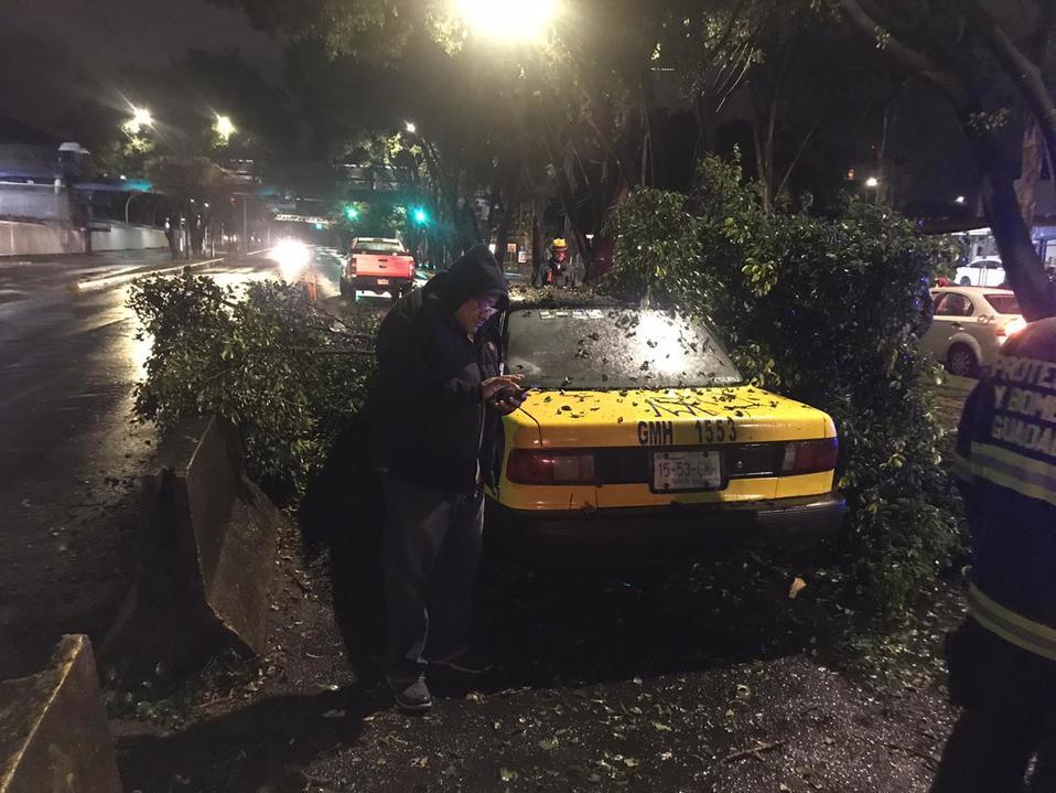 Guadalajara: cae rama de árbol a taxi sobre Mariano Otero - Milenio