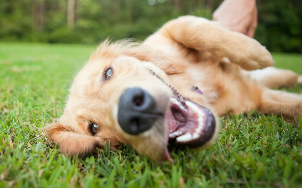 Día del Perro 2021. Por qué se celebra el 21 de julio a nivel mundial