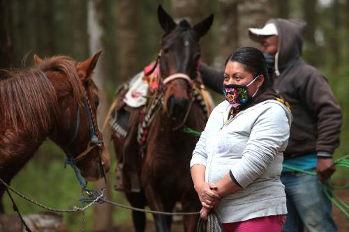 Preparan el despegue con aleteos presurosos que las ayudan a calentar sus pequeños cuerpos.   Tania Contreras