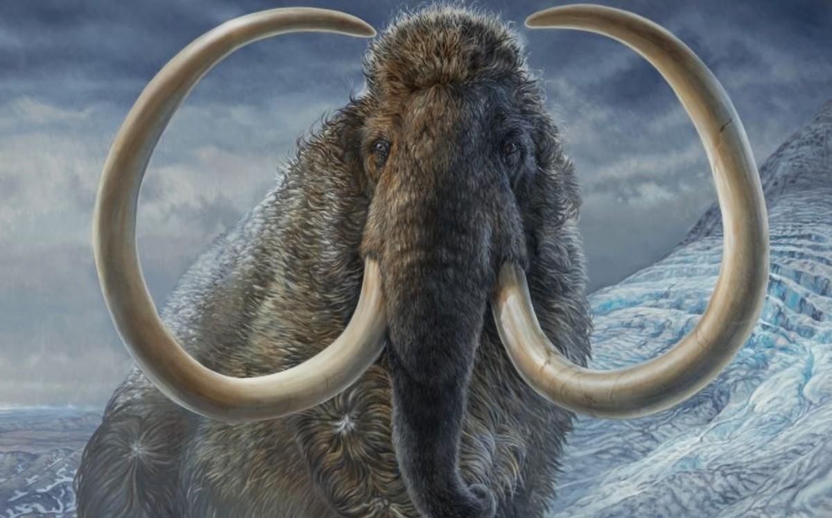 Mamut lanudo. Empresa busca resucitar al animal para sanar la Tierra