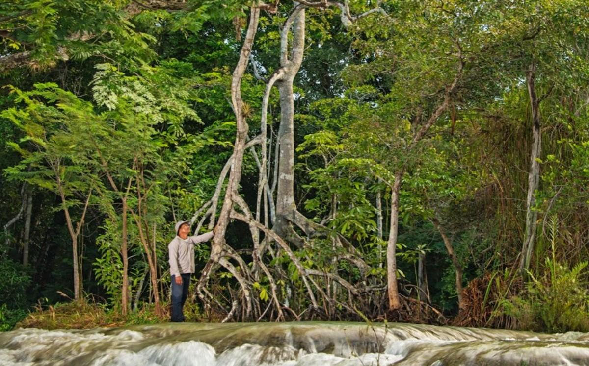 México. Hallan mundo perdido de manglares en Yucatán